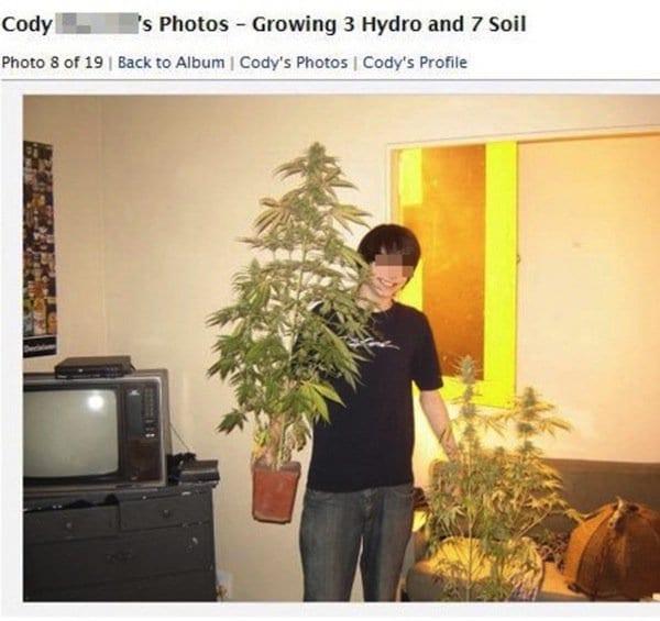 crim-plants