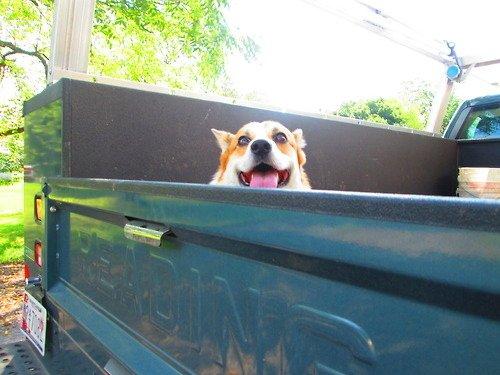 dog-best-friend-adventure