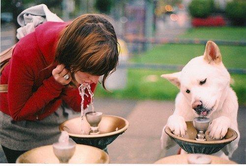 dog-best-friend-everything