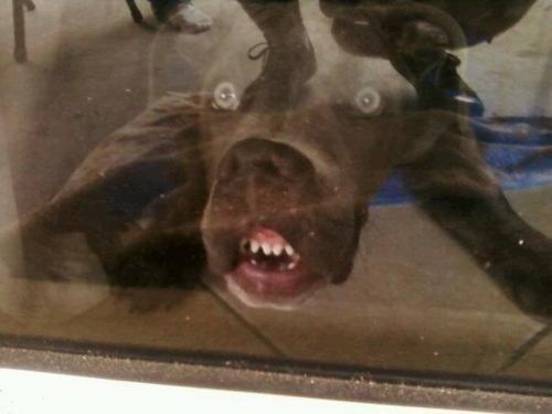 dog-best-friend-face
