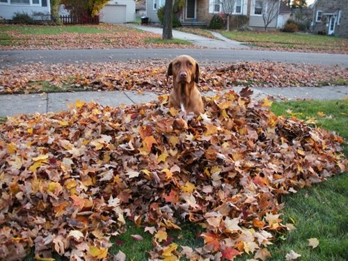 dog-best-friend-fall