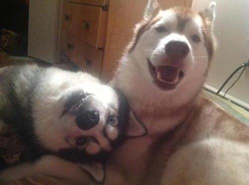 dog-best-friend-listen