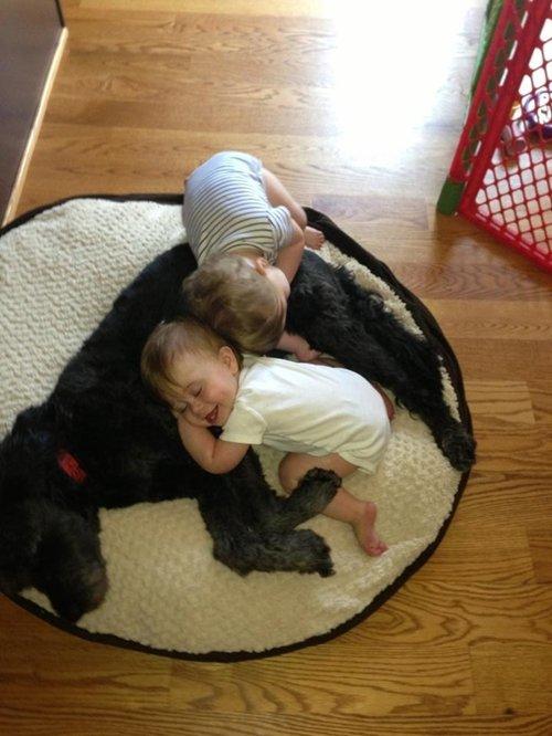dog-best-friend-nap