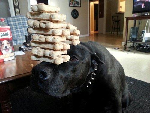 dog-best-friend-records