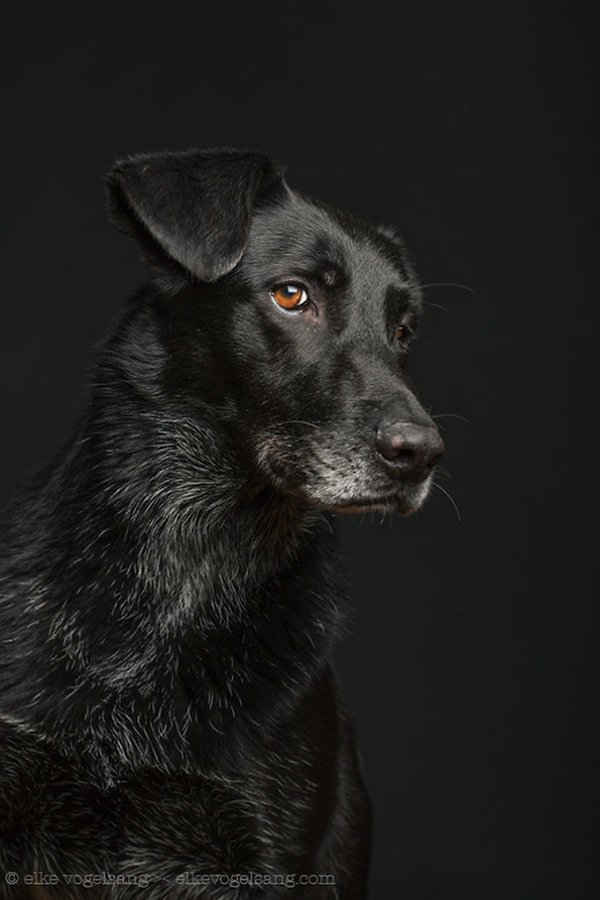 dog-black