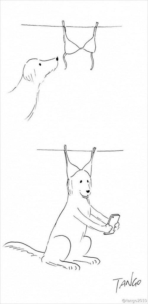 dog bra selfie