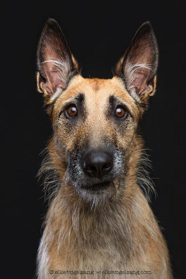 dog-brown