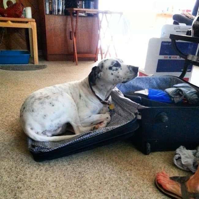 dog case lid