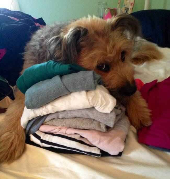 dog clothes pile