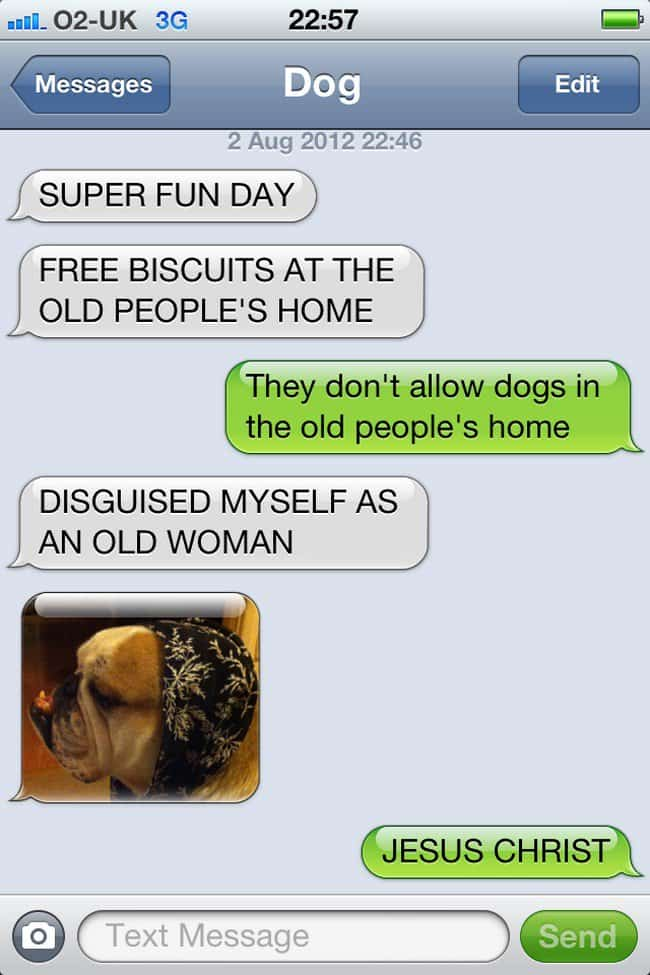 dog disguise text