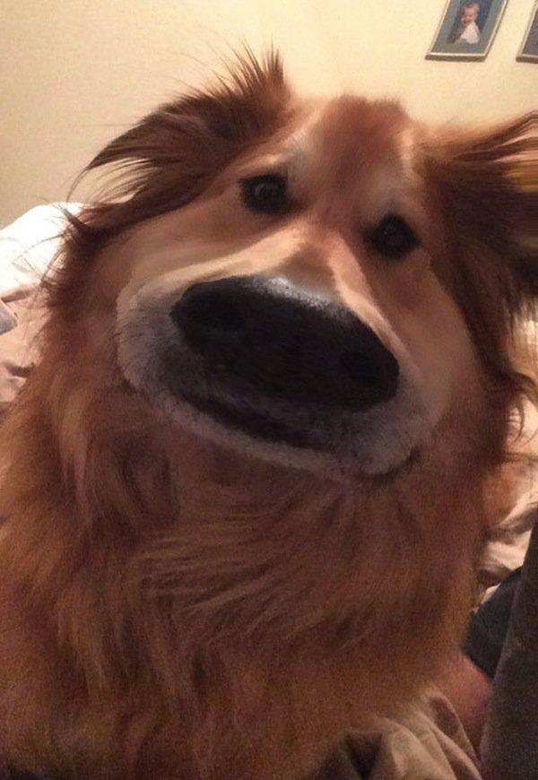 dog-dug-face