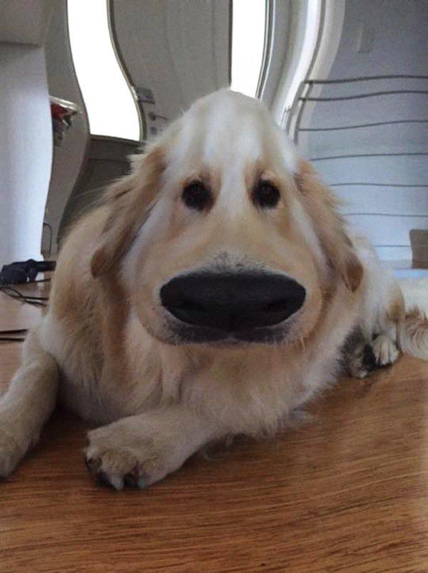 dog-dug-first