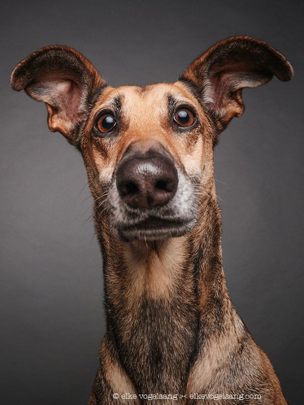 dog-first