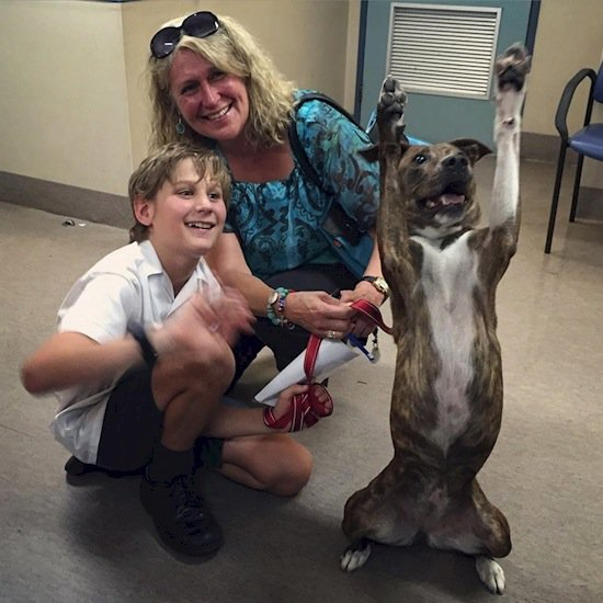 dog-jubilant