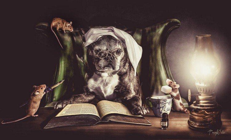 dog mice book
