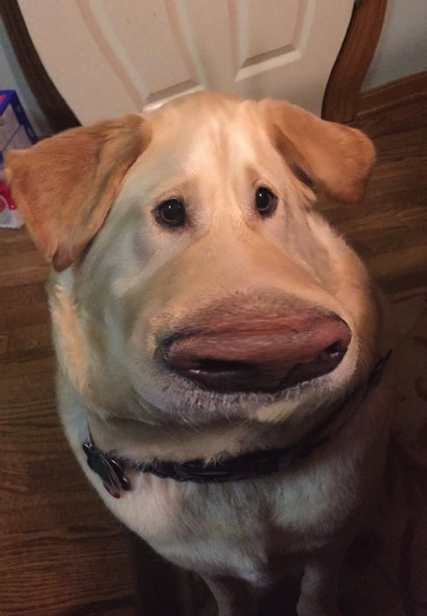 Tumblr: This Cool 'Snapchat' Filter Will Make Your Dog Look Like