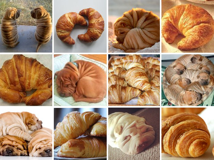 dog-or-food-croissant