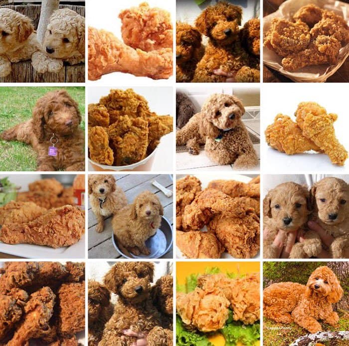 dog-or-food-doodle