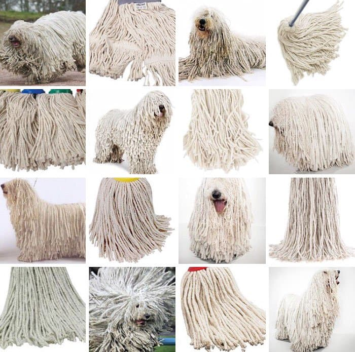 dog-or-food-mop
