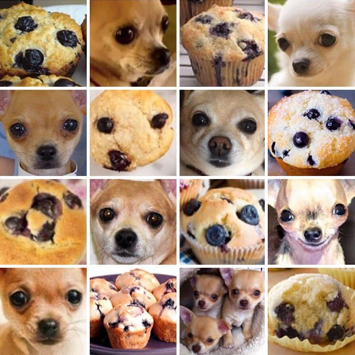 dog-or-food-muffin