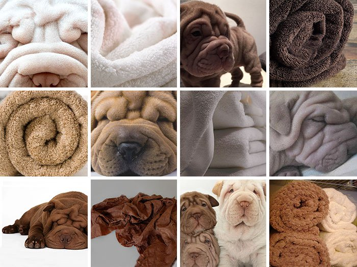 dog-or-food-towel