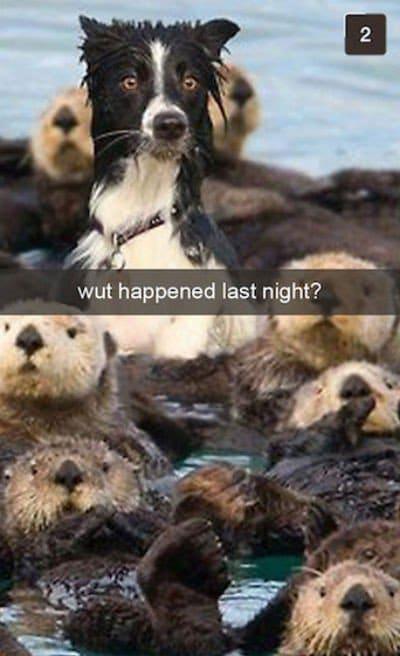 dog otters