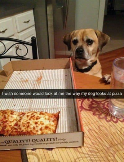 dog pizza