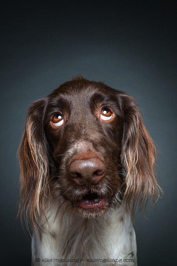 dog-sanity
