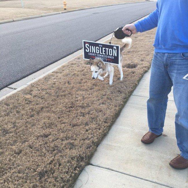 dog sign stuck