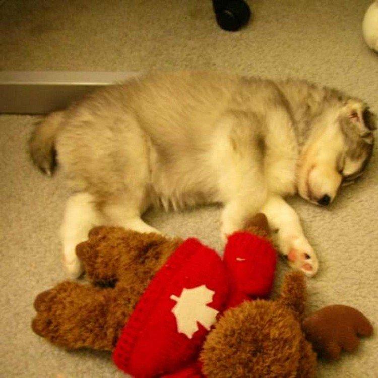 dog snuggled