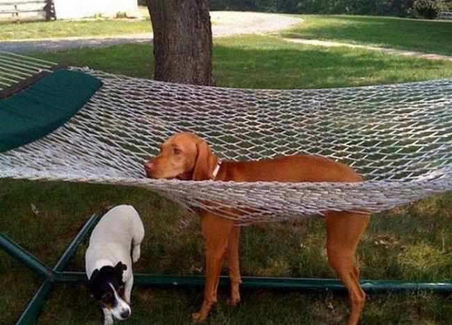 dog stuck tramp