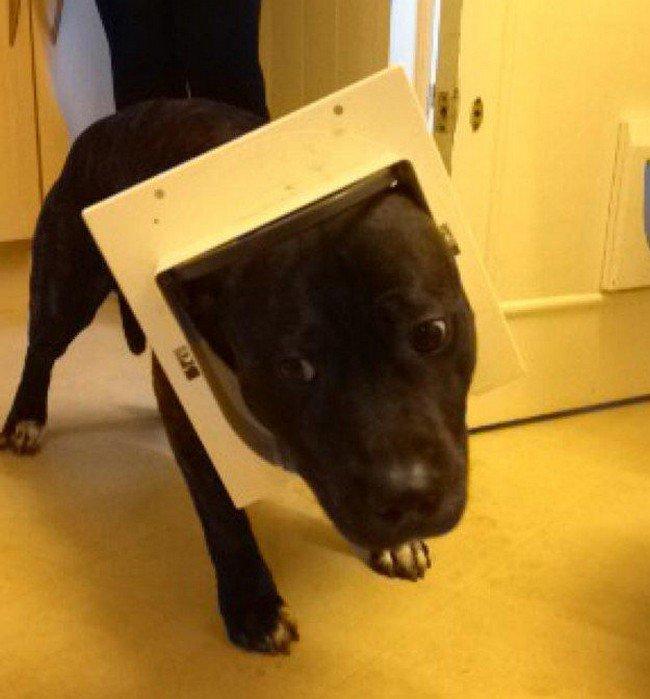 dog stuck