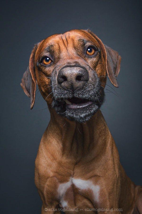 dog-talking