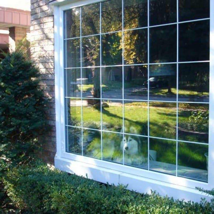 dog windowsill