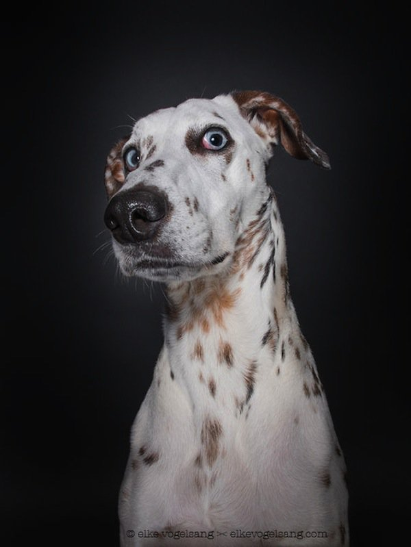 dog-woah
