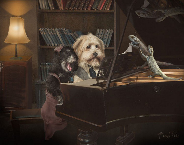 dogs piano