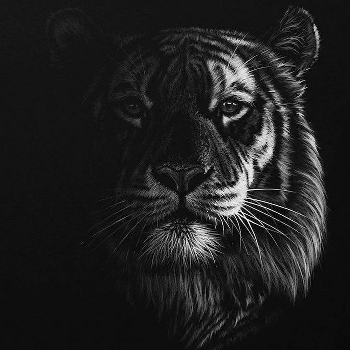 drawing big cat