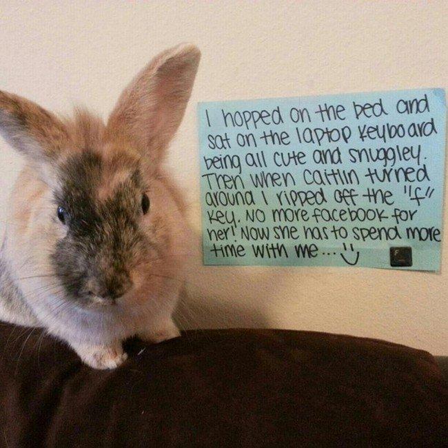 f key bunny