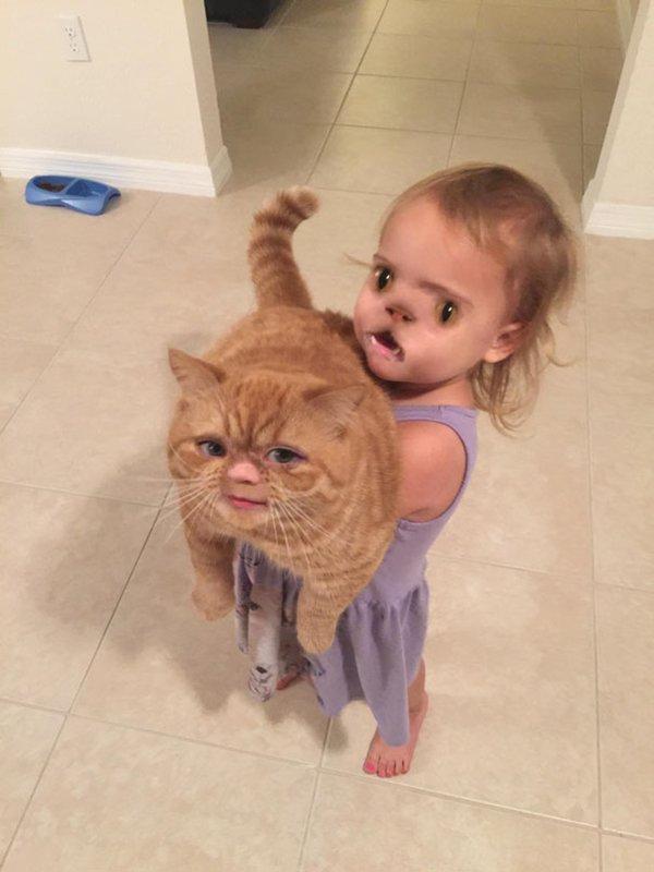 face-swaps-cat