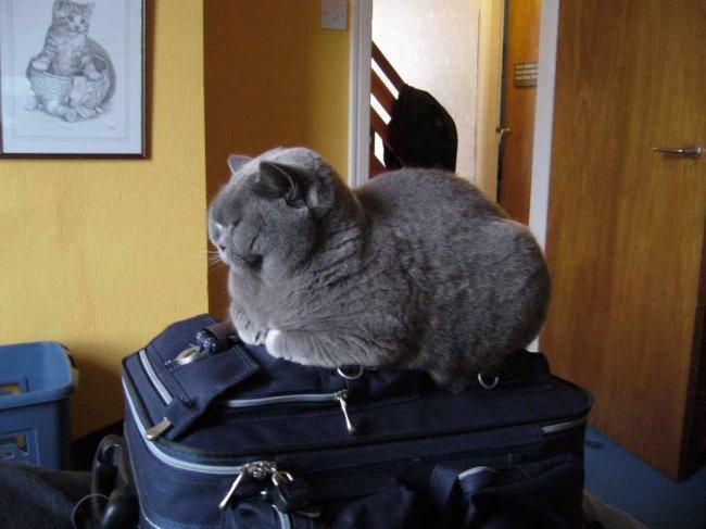 fat cat case