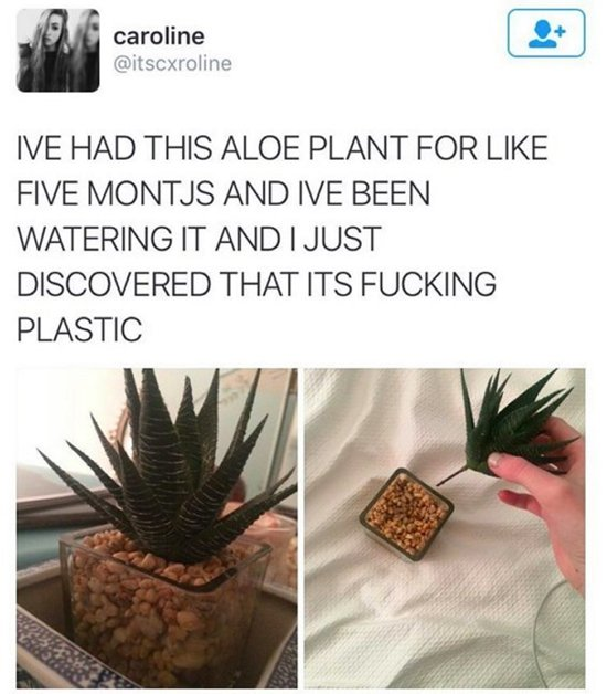 funny-pictures-plant