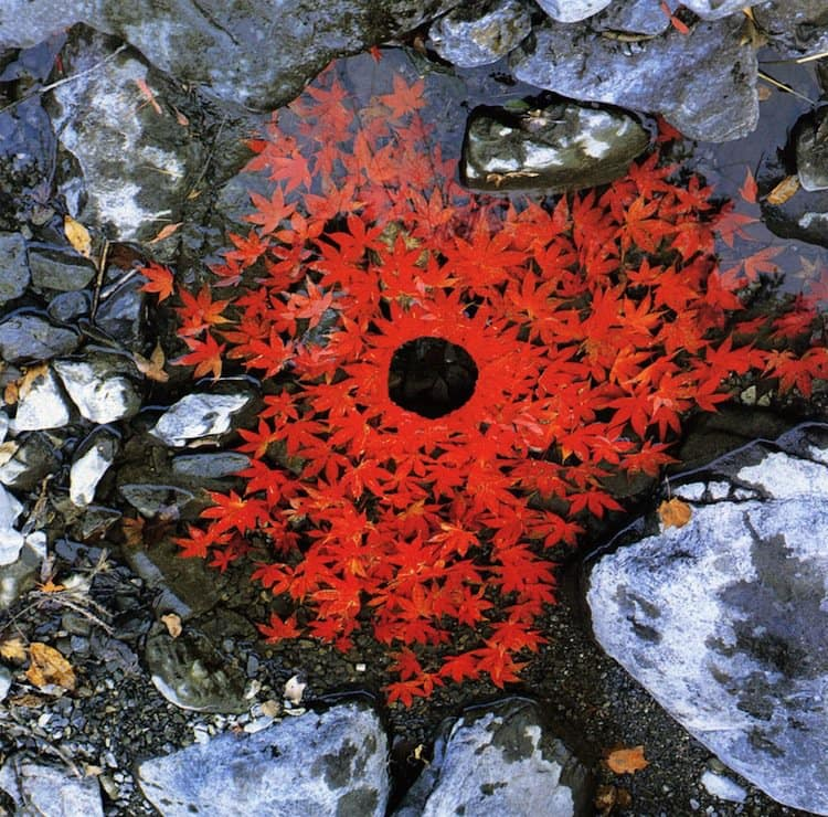 goldsworthy-leaf