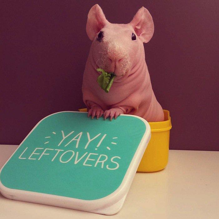 guinea-leftovers