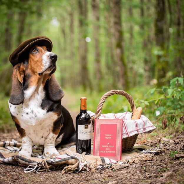 handsome-dogs-basset