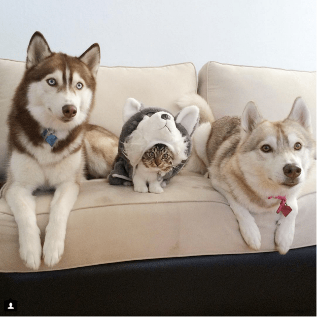 handsome-dogs-cat