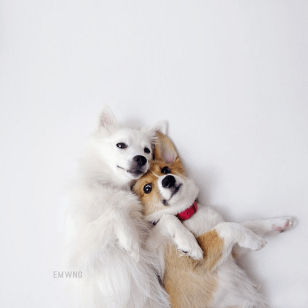 handsome-dogs-duo