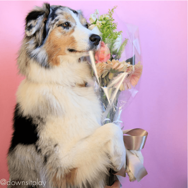 handsome-dogs-flowers