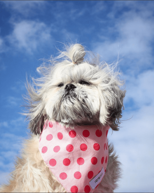handsome-dogs-hair
