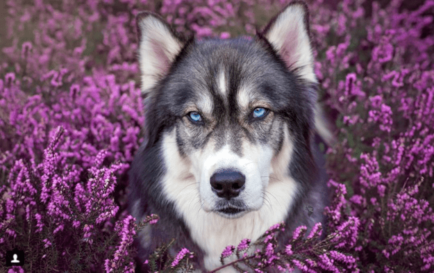 handsome-dogs-heather