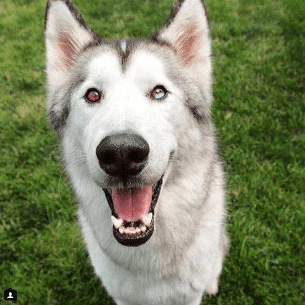 handsome-dogs-loki